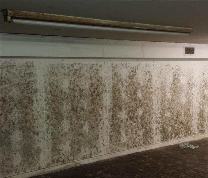 Mold Remediation The Most Likely Places To Find Mold in Your Home