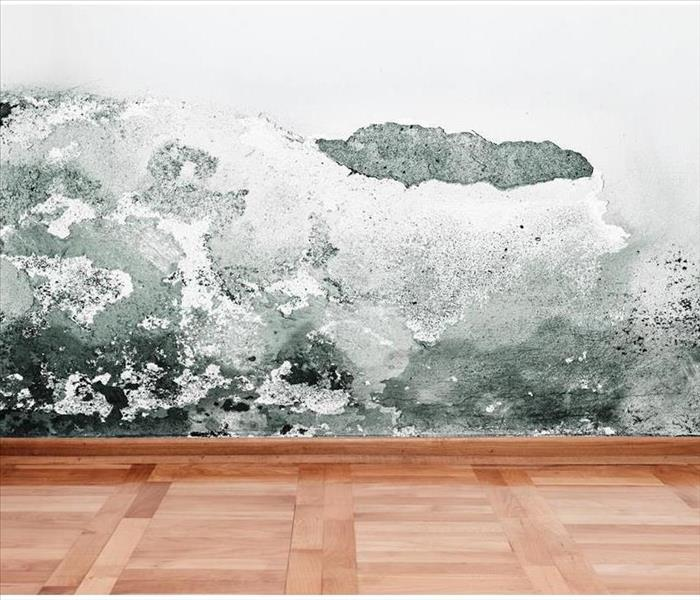 Why SERVPRO The 3 Most Common Places To Find Mold