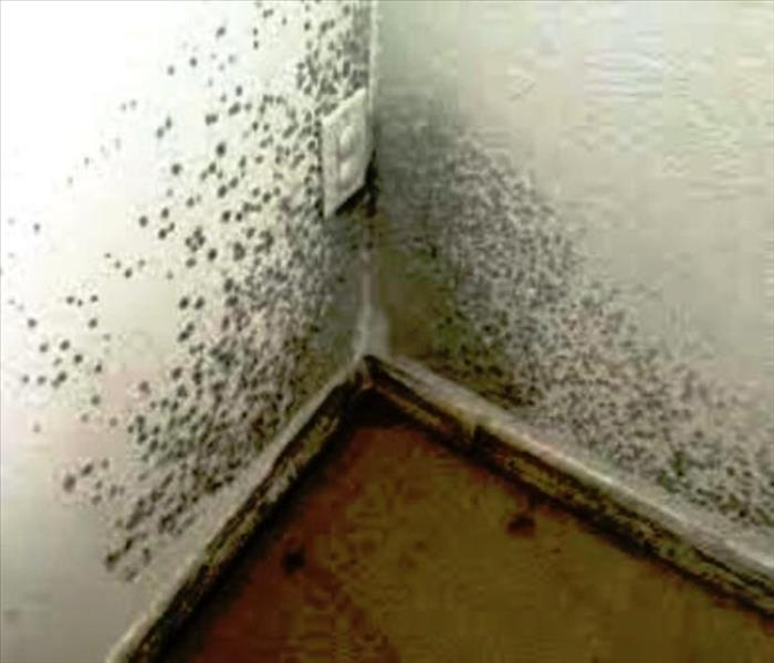 Mold Remediation Removal In Ny State For 10x10 Square Feet It S A Fungus Among